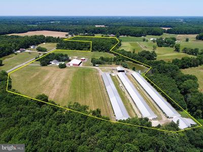 Hartly Farm For Sale: 1385 Lockwood Chapel Road