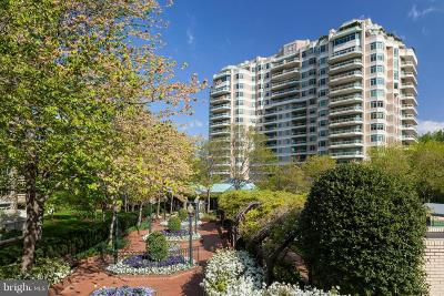 Chevy Chase Condo For Sale: 5630 Wisconsin Avenue #203