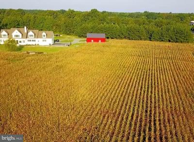 Talbot County Farm For Sale: 26485 Tunis Mills Road
