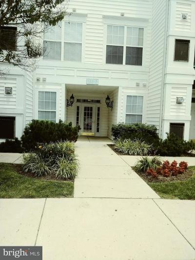 Bowie Rental For Rent: 15616 Everglade Lane #204