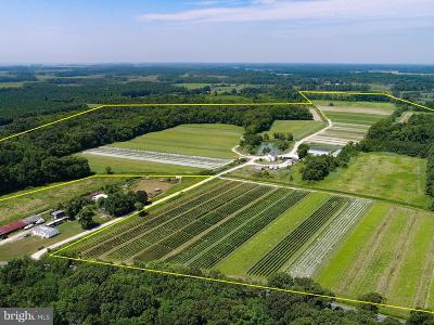 Somerset County Farm For Sale: 5470 Cornstack Road