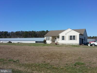 Wicomico County Farm For Sale: 31784 Fred Adkins Road
