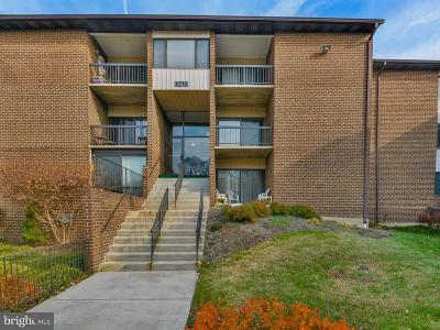 Beltsville Rental For Rent: 11216 Cherry Hill Road #204