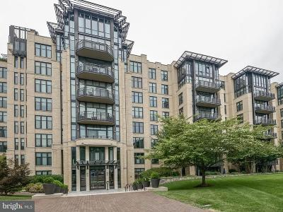 Chevy Chase Townhouse For Sale: 4301 Military Road NW #PH8