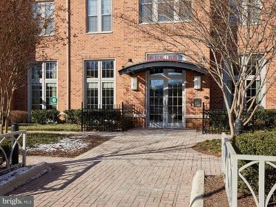 Rental For Rent: 1391 Pennsylvania Avenue SE #248