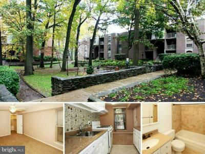 Annandale Rental For Rent: 3354 Woodburn Road #23