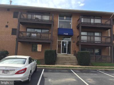 Annandale, Falls Church Condo For Sale: 7528 Savannah Street #101