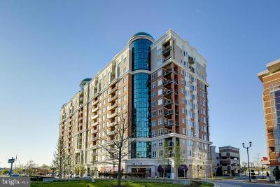 Anne Arundel County Condo For Sale: 1915 Towne Centre Boulevard #303