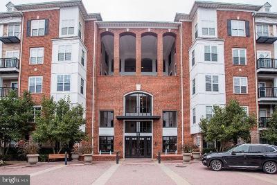Rockville Rental For Rent: 501 Hungerford Drive #312