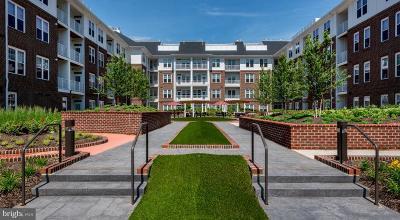 Fairfax Rental For Rent: 3955 Fair Ridge Drive #2-309