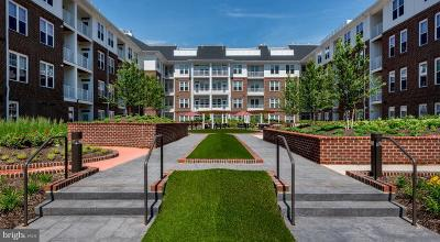 Fairfax Rental For Rent: 3955 Fair Ridge Drive #2-314