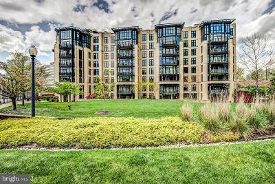 Chevy Chase Condo For Sale: 4301 Military Road NW #204