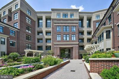 Chevy Chase Condo For Sale: 4750 41st Street NW #502