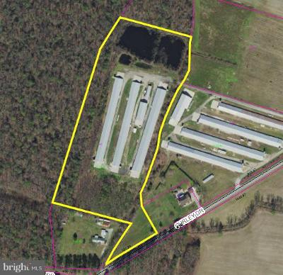 Farm For Sale: Curley Dr