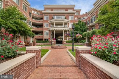Annapolis Condo For Sale: 66 Franklin Street #10