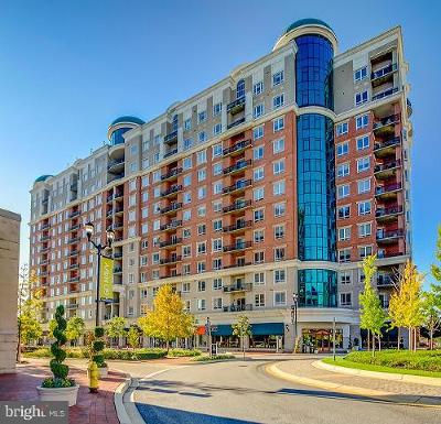 Anne Arundel County Condo For Sale: 1915 Towne Centre Boulevard #1202