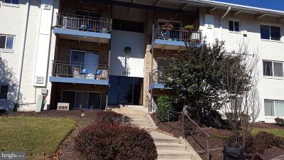 Beltsville Rental For Rent: 11368 Cherry Hill Road #104