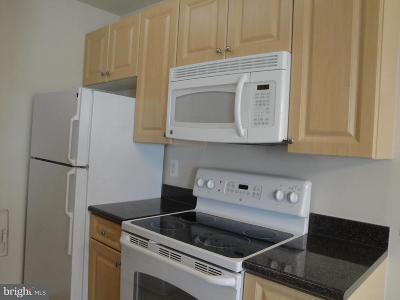 Hyattsville Rental For Rent: 1005 Chillum Road #416