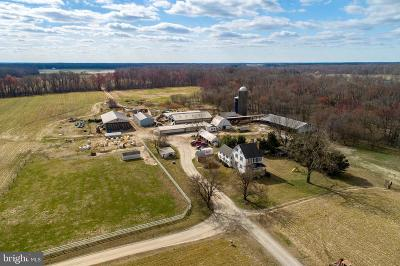 Queen Annes County Farm For Sale: 206 Moores Lane