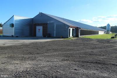 Worcester County Farm For Sale: 13135 Hidden Acres Lane