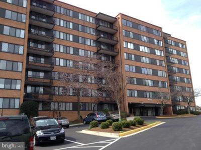 Arlington Condo For Sale: 4390 Lorcom Lane #801