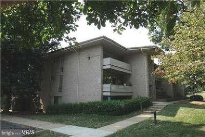 Falls Church Rental For Rent: 110 Birch Street #C-2