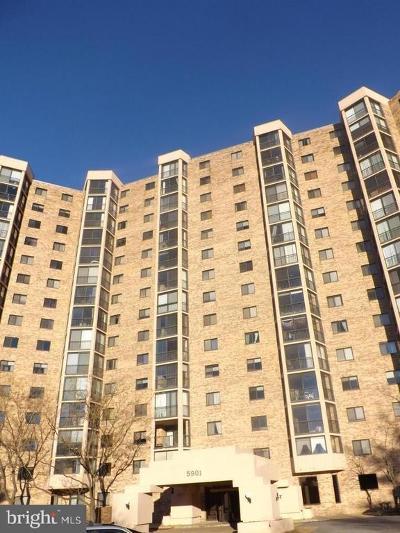Rental For Rent: 5901 Mount Eagle Drive #507