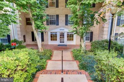 Fairfax County Condo For Sale: 7700 Tremayne Place #307