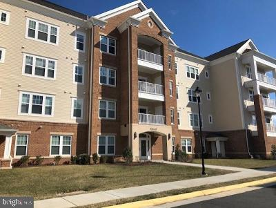 Ashburn Condo For Sale: 20640 Hope Spring Terrace #204