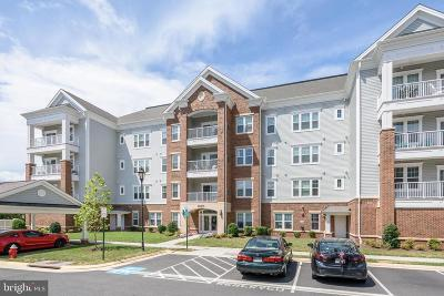Ashburn Condo For Sale: 20655 Hope Spring Terrace #207