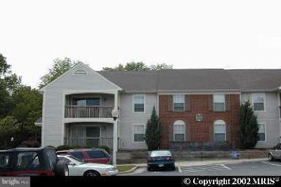 Manassas Rental For Rent: 9420 Scarlet Oak Drive #10