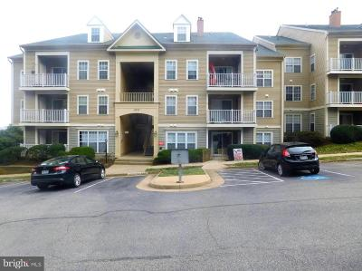 Prince William County Condo For Sale: 1037 Gardenview Loop #303