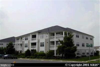 Manassas Rental For Rent: 11020 Folksie Court #303