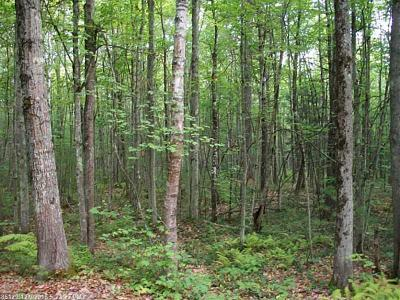 York County, Cumberland County Residential Lots & Land For Sale: M2-L50 Mouse Lane