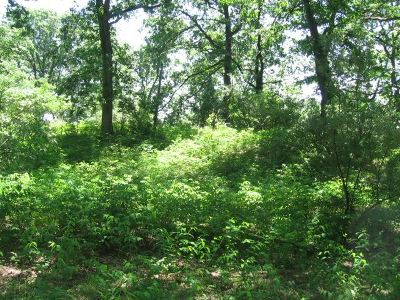 Hillsdale County Residential Lots & Land For Sale: 10979 Waldron Rd