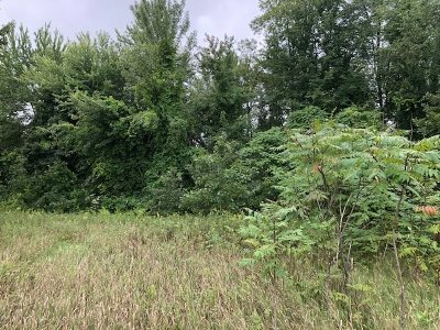 Brooklyn MI Residential Lots & Land For Sale: $100,000