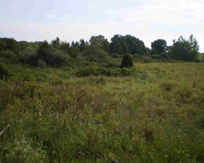 Grass Lake MI Residential Lots & Land For Sale: $80,760