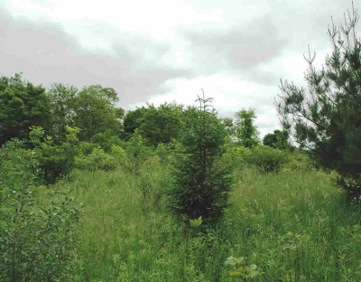 Saline MI Residential Lots & Land For Sale: $79,000