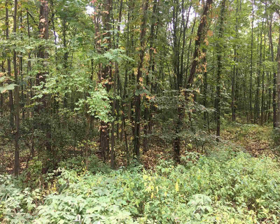 Grass Lake Residential Lots & Land For Sale: Harr Rd
