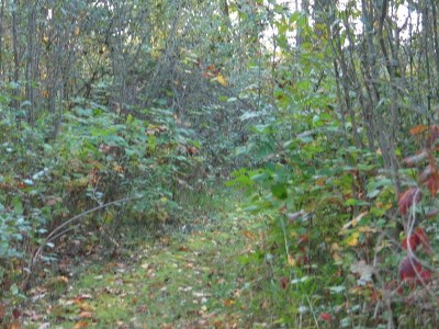 Cement City MI Residential Lots & Land For Sale: $59,000