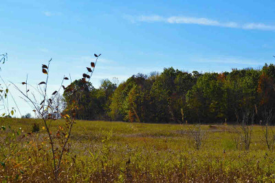 Saline MI Residential Lots & Land For Sale: $144,900