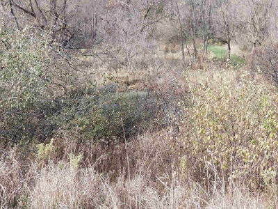 Grass Lake MI Residential Lots & Land For Sale: $287,000