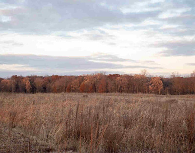 Dexter MI Residential Lots & Land For Sale: $1,249,000