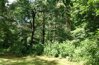Chelsea MI Residential Lots & Land For Sale: $108,000