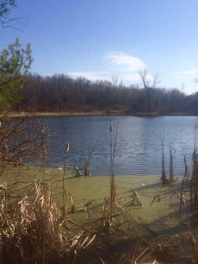 Manchester MI Residential Lots & Land For Sale: $98,000