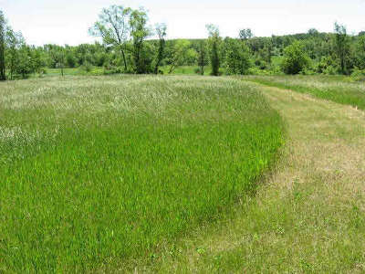 Manchester MI Residential Lots & Land For Sale: $92,000