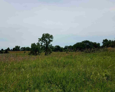 Dexter MI Residential Lots & Land For Sale: $70,000