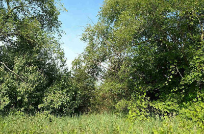 Adrian MI Residential Lots & Land For Sale: $45,000