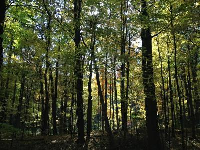 Manchester MI Residential Lots & Land For Sale: $199,000