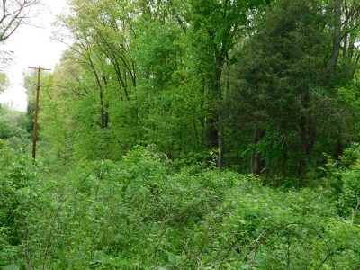 Residential Lots & Land For Sale: McIntire Ct.